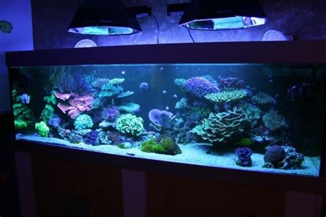 comment faire un aquarium d eau de mer exemple id 233 e d 233 co aquarium eau de mer