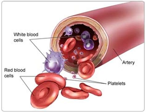 which blood component gives blood its color joe reed biologymatters it s in the blood