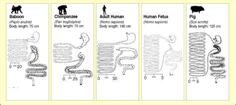 biologian human diet hints  evolution