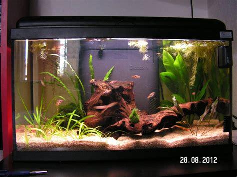 id 233 e poissons pour 60l rasboras heteromorpha forum aquarium
