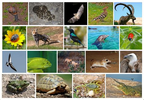 Wildlife of Israel Wikipedia