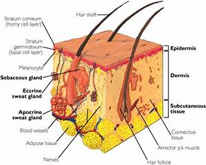Dermatology Review