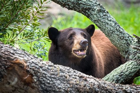 bear awareness day  houston zoo