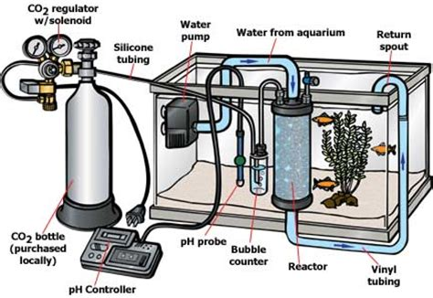 freshwater planted aquarium plant care drs foster smith deluxe fully automatic co2 system