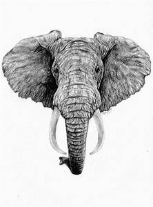 African Elephant by kirstyalcock on DeviantArt