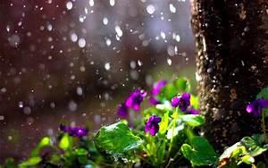 Spring Rain Desktop Wallpaper Nexus - WallpaperSafari