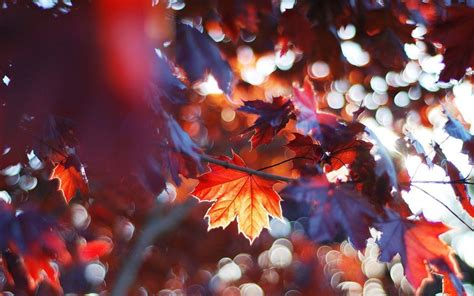 Autumn Wallpapers Cozy by Wallpapers Autumn Wallpaper Cave