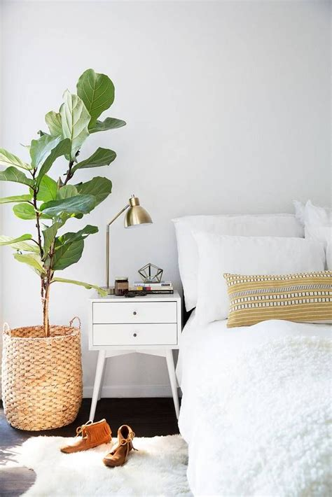 best plants for bedroom 25 best ideas about bedroom plants on plants