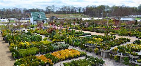 Gardening Planting Tips Trends Gene Sumi Homestead