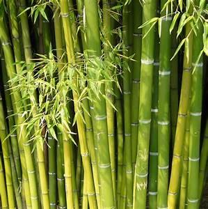 Bambus Im Garten : bambus naturfaser didymos ~ Michelbontemps.com Haus und Dekorationen