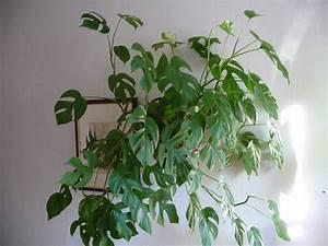 Plante Intérieur Grimpante : plantes grasses d 39 appartement photo de plantes vertes d 39 appartement images plants plante ~ Louise-bijoux.com Idées de Décoration