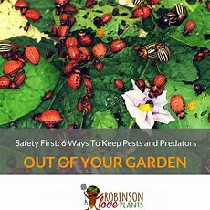 Safety First 6 Ways To Keep Pests And Predators Out Of