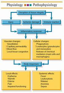 Charts And Figures  Inflammatory Response