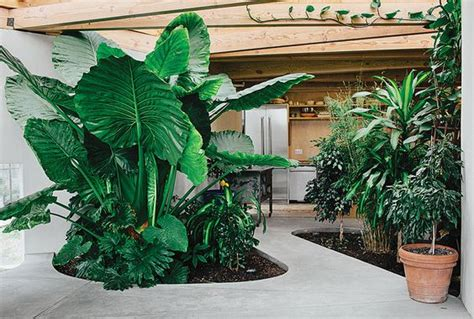 how to set up a small but wonderful indoor garden page 3
