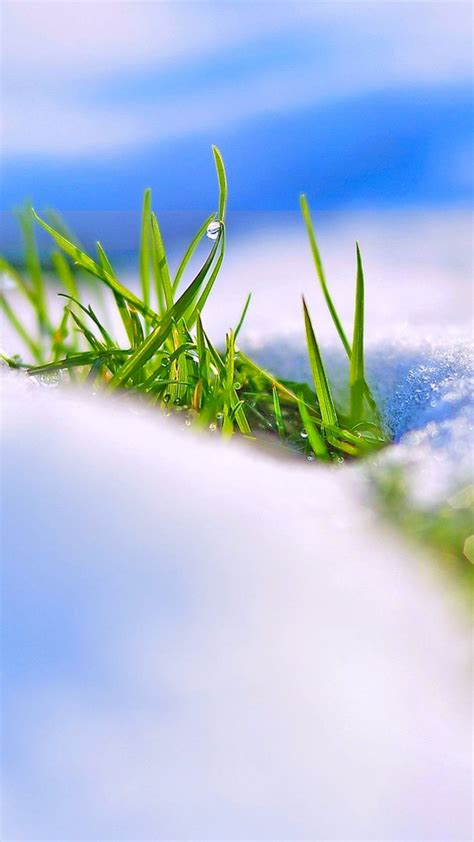 stock images snow winter grass  stock images