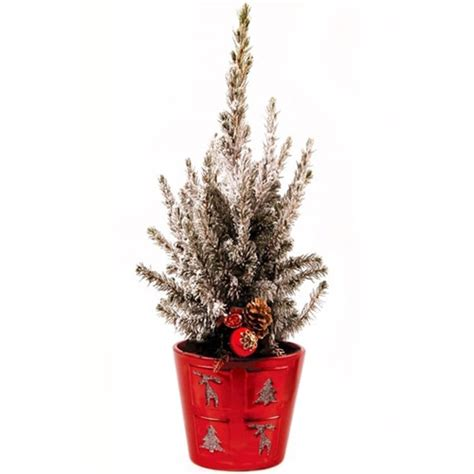 achat sapin en pot sapin de no 235 l naturel en pot pi11 h 40 50 cm vente sapin de no 235 l naturel en pot pi11 h