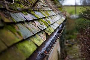 Moos Auf Dem Dach : kupfer auf dem dach so sch tzen sie es vor moos ~ Watch28wear.com Haus und Dekorationen