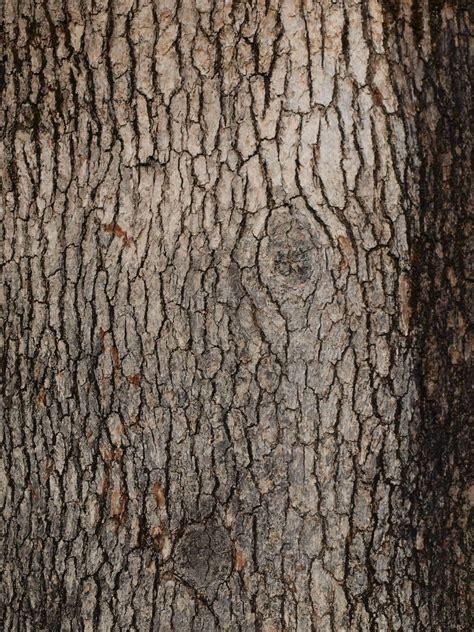 tree bark texture tree bark texture freebies textures pinterest tree bark barking f c and woods