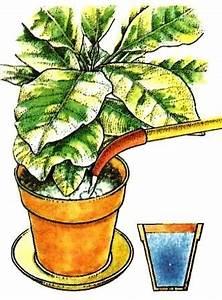 Pflege Von Zimmerpflanzen : gie en pflege von zimmerpflanzen zimmerpflanzen zimmer und gartenblumen ~ Markanthonyermac.com Haus und Dekorationen