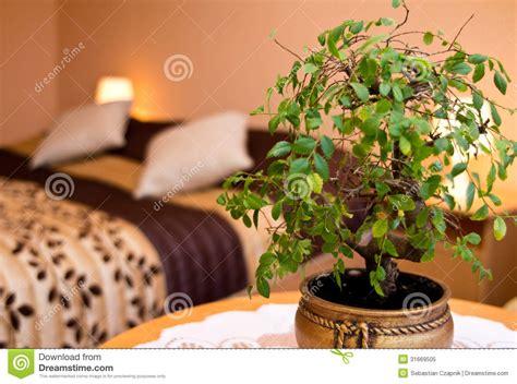 plante dans la chambre plante en pot dans une chambre à coucher photo libre de