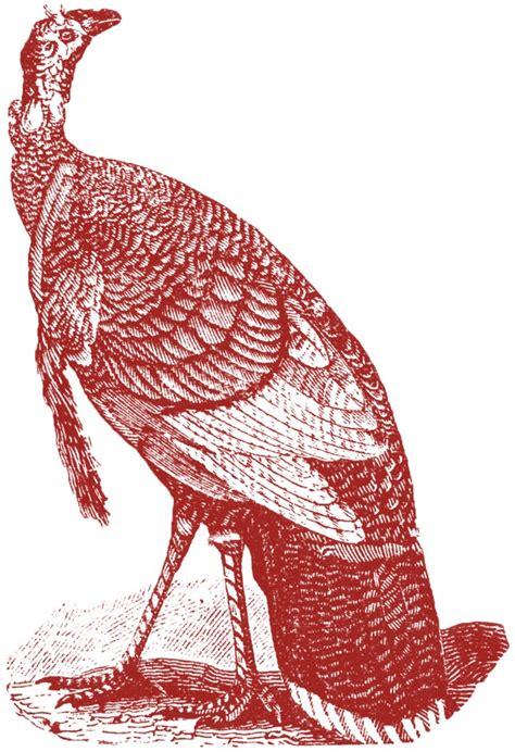 antique turkey images  graphics fairy
