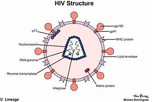 Human Immunodeficiency Virus    Acquired Immunodeficiency