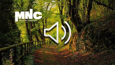 bosque efecto de sonido forest sound effect youtube