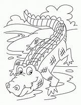 Crocodile Coloring Colour Pages Printable Popular sketch template