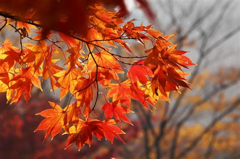 Kleiner Garten Im Herbst by 10 Str 228 Ucher B 228 Ume Mit Intensiver Herbstf 228 Rbung Plantura