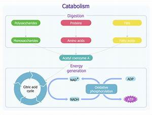Drawing Biology Diagrams