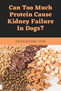 Can Too Much Protein Cause Kidney Failure In Dogs In 2020