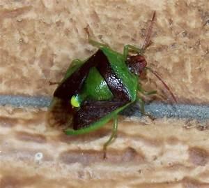 Plante Repulsif Mouche : jardin secret urbain les insectes ~ Melissatoandfro.com Idées de Décoration