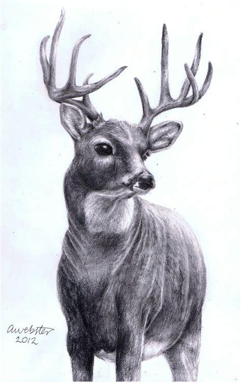 realistic deer  annokat  deviantart