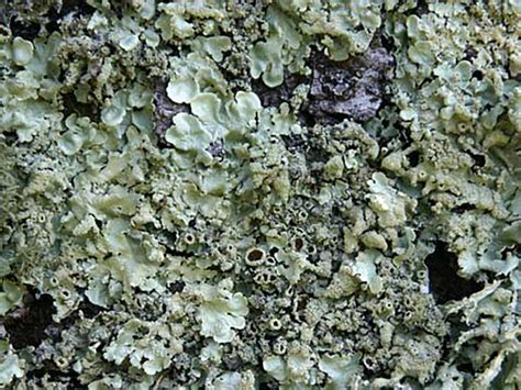 Lichens And Air Quality (u.s. National Park Service How To Fix A Leaky Concrete Tile Roof Repair North Miami Kensington Gardens Brunch Menu Garden Restaurant Central London Dicor Rubber Coating System Superior Siding And Roofing Nj Reviews 2017 Toyota Highlander Rack Cross Bars Installation All Phase Gutters Colorado Springs