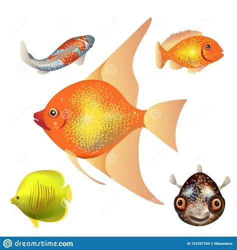 set  fish  types  fish colorful