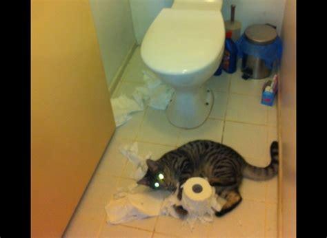 papier toilette perla images