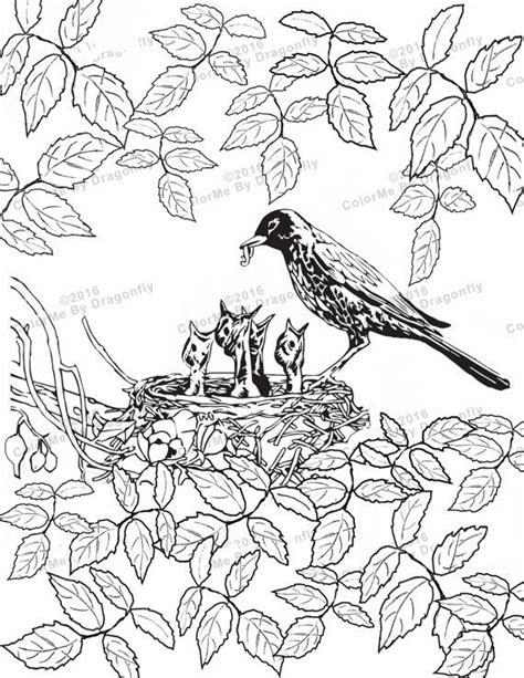 mother bird feeding babies adult bird art adults bird