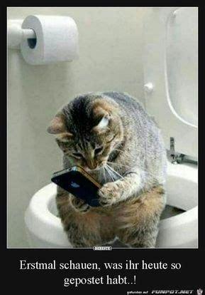die besten 25 katzen witze ideen auf grumpy cat humor lustige katzenzitate und