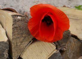 Holz Schnell Trocknen : brennholzlager im garten so geht s schnell und g nstig altes ~ Frokenaadalensverden.com Haus und Dekorationen