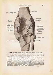 Right Knee Joint Diagram