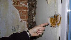 reconnaitre le merule le champignon lignivore With champignon de maison merule