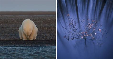 The Winners Of The 2016 National Geographic Nature ...