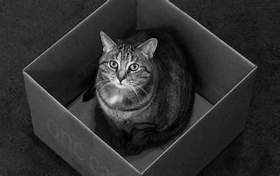 Quantum Physics Wallpapers Cat Dingers Cats Animals