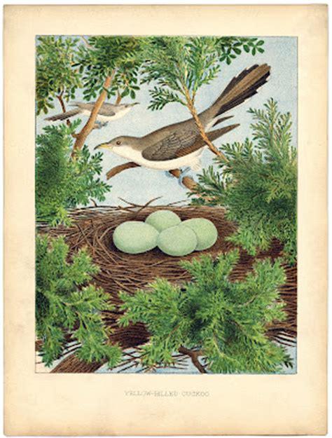 instant art printable beautiful bird nest eggs