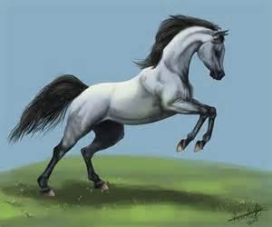 Arabian Horse Tattoos - Viewing Gallery