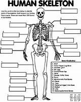 Skeleton Human Coloring Crayola Pages Bones Anatomy Bone Printable Body Colouring Foot Hand Sheet Label Arm Parts Printables Organs Heart sketch template