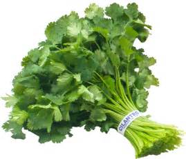 Parsley Cilantro