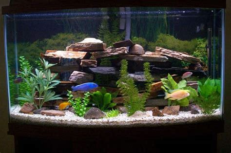 Arowana Fish Tank Decoration by How To Clean A Fish Tank Aquarium Water Changes Made Easy