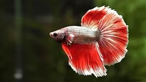 Ramona Osche   fish – natural shots