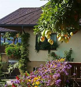Heidelbeeren Pflanzen Balkon : himbeeren pflanzen balkon himbeeren auf dem balkon ~ Lizthompson.info Haus und Dekorationen